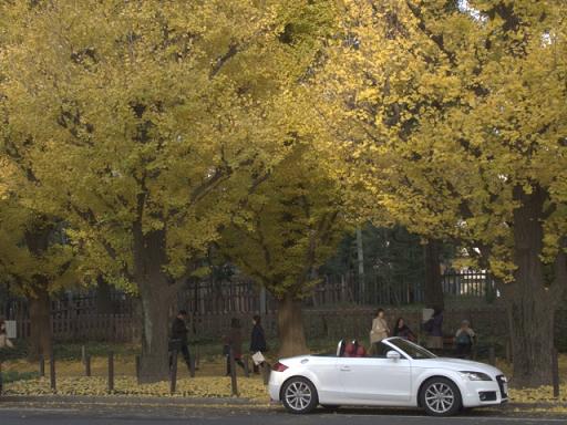 銀杏並木のオープンカー